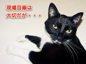 cat-big-eyes-1428201-m