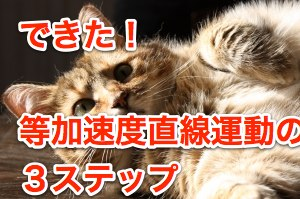 lazy-cat-1401315-m