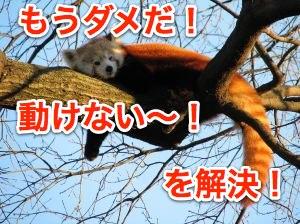 red-panda-973285-m