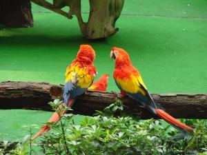 bird-talk-1370057-m